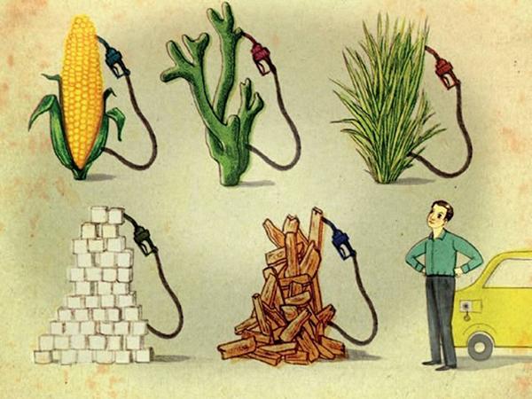 Биотопливо: его роль в будущем человечества